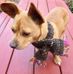 handmade brown wool yarn and colorful stitch knitting scarf for small dog on Etsy, $20.00