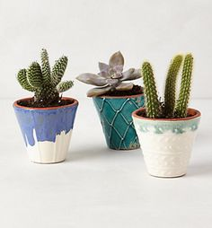 cactuses to bring in that western vibe, nestled in bright colored pots