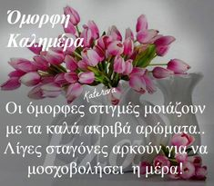 Good Morning, Verses, Mornings, Plants, Buen Dia, Bonjour, Bom Dia, Plant, Lyrics