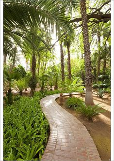 Poster Print-Majorelle Gardens, Marrakesh, Morocco, North Poster sized print made in the USA Dubai, Marrakesh, North Africa, Poster Size Prints, Photo Greeting Cards, Morocco, Landscape Design, Framed Prints, Australia