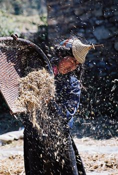 The Harvest . Bhutan