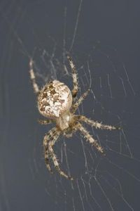 Our virginia local on pinterest virginia spider and for How to keep spiders away from your bed