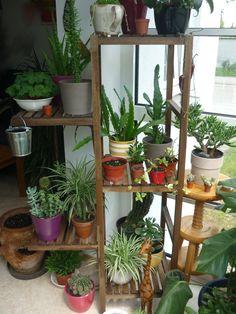 indoor garden on a rebuilt ikea shelf