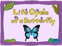 Great activity for teaching the life cycle of a butterfly. Contains 13 pages.Life Cycle wheel activity for students to label each phase of the life cycle, read about it, color and cut.  Use a brad to attach the cover so it turns to reveal each phase.Teacher full color sample is included so you don't have to color one!Story Cards:  Each phase has a large picture teaching card with interesting, fun facts on the back for you to read and teach.