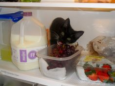 Cat in the fridge? And 8 other mischievous pets (Submitted by a mcclimon)