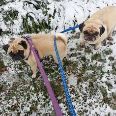 """""""Come on Sunny. It's too slushy to poop here. I'll lead the way to a better spot."""" (SR)"""