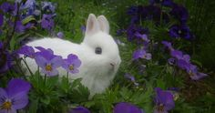 Un petit lapin blanc, adorable. Baby Bunnies, Cute Bunny, Bunny Rabbit, Easter Bunny, Animals And Pets, Baby Animals, Cute Animals, Poodles, Beautiful Creatures