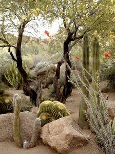 Landscaping Plants, Front Yard Landscaping, Landscaping Ideas, Arizona Landscaping, Landscape Design, Garden Design, Cactus Silhouette, Cactus E Suculentas, Desert Backyard