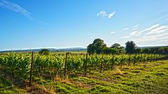 Brexit Could Be Making British Wine Industry Stronger Than Ever | Food & Wine