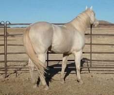 Rare colored horses! POST AWAY!! - Page 2 Smoky Cream Roan: