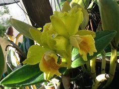 Minha orquídea!!!!