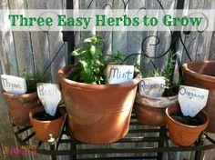 Three Easy Herbs to Grow
