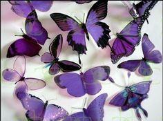 Perhosia <3