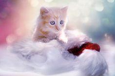 Gatinho, Grey, Coração, Gato, Natal