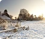 Five must-have winter rescue natural remedies
