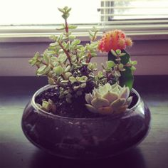 DIY Terrarium #collegehill #plants #terrarium