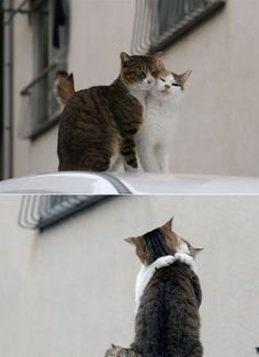 Cats' love :)