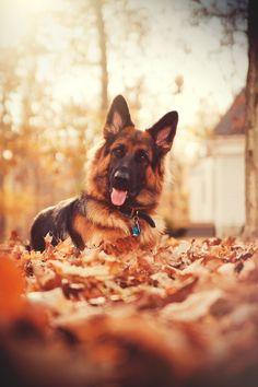 Im ready for autumn #rescuedog #dog #itsarescuedoglife