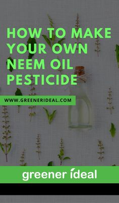 Neem oil is also powerfully aromatic and gives off an odour that insects do not like, protecting plants by making them unappealing. To make your own neem oil pesticide spray, follow these steps.