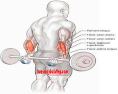 The 4 Best Exercises You Must DO For Huge Forearm - True Bodybuilding - Page 2 Big Forearms, Forearm Workout, Gym Workouts For Men, Super 4, Mens Fitness, Exercises, Bodybuilding, Exercise Routines, Excercise