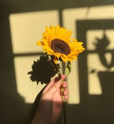 I wanted to post an aesthetic pic, yellow themed with a focus piece x Aesthetic Colors, Flower Aesthetic, Aesthetic Photo, Aesthetic Pictures, Aesthetic Yellow, Sun Aesthetic, Vintage Wallpaper, Photographie Portrait Inspiration, Sunflower Wallpaper