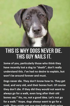 This is why dogs never die. You have to click to read the whole thing, but its so worth it! iheartdogs.com/...