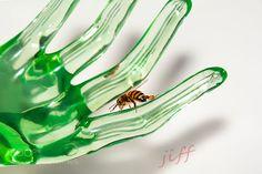 bee by JiffOchentaycuatro via http://ift.tt/2g92OIM