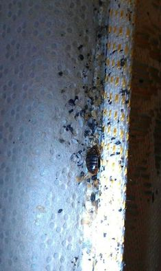 and across Ants, Cockroaches, Rats, Termites, General Pests. Guaranteed Gone! For more detail call us now at 0403822621 Termite Inspection, Termite Control, Pest Solutions, Pest Control Services, Garden Guide, Ants, Brisbane, Home Remedies