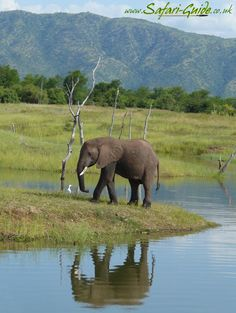 South Africa  I love elephants also, I have always felt like they are good luck. When I was little my grandmother use to tell me that an elephant with his trunk in the air is good luck.