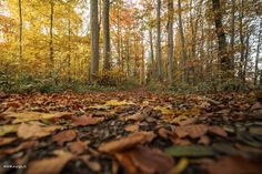 Autumn | #forest #autumncolors #heitersberg  #aargau #Switzerland - take a look at my photoblog under www.raegi.ch or with a click on the pin Leaves, Urban, Instagram, Autumn Forest, Nature, Plants, Switzerland, Pictures, Woodland Forest