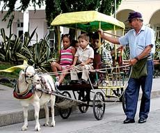 #goatvet likes this goat cart ride service in Cuba