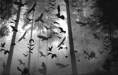 Flock of birds photography black and white birds pictures photos photography ideas photography pictures Samhain, Forest Tumblr, Fear Of Flying, Bird Flying, Crows Ravens, Dark Forest, Misty Forest, Macabre, Dark Art