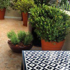 Varanda | terrace | tidelli | Creare Paisagismo