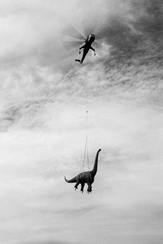 helicopter flying carrying a long neck dinosaur, black white vintage photograph Urbane Fotografie, Arte Peculiar, Art Et Illustration, Bizarre, Vintage Humor, T Rex, Vintage Images, Black And White Photography, Old Photos