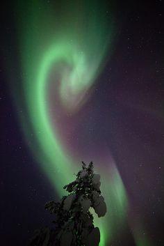 Aurora Dragon - Finnish Lapland