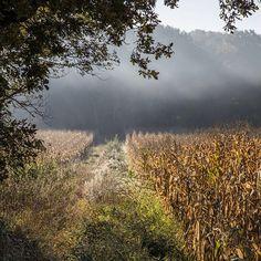 Les champs de blés du domaine de Gaztelur. #gaztelur #champs #bles #cereales #nature #campagne #campo #vert #green #paysbasque #paisvasco #arcangues #biarritz #suedouest #photocarlosmartinez