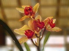 » Orchid at Arunachal