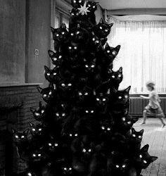 Christmas_Tree_Cats_111_plus_more_ANIMATION