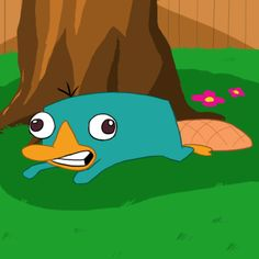 Perry the platypus. =D