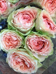Rose 'Gravity'...pink/peach centre and green edges! Sold in bunches of 10 stems from the Flowermonger the wholesale floral home delivery service.