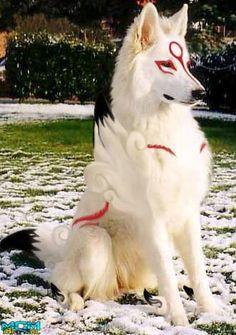 Cão cosplay