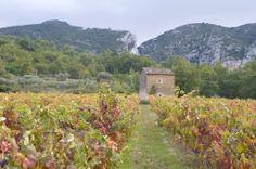 Oppède - balade dans les vignes