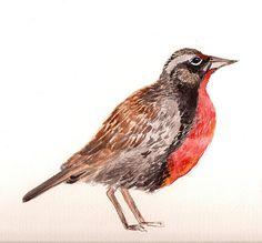 Claudia Ortiz Robles   segunda loica,  #bird,  #design