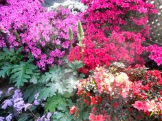 Azaleas Dominate the Show Room, but There Are Other Flowers