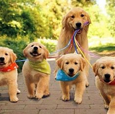 With Cuteness There aren't many things cuter in this world than a Golden Retriever puppy.There aren't many things cuter in this world than a Golden Retriever puppy. Cute Dogs And Puppies, Baby Dogs, I Love Dogs, Pet Dogs, Dog Cat, Pets, Doggies, Cute Dogs And Cats, Adorable Puppies