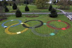 Kew Gardens - Olympic Rings, 25000 flowers