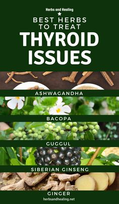 Below are the best herbs proven to help people with thyroid issues: Low Thyroid, Thyroid Issues, Thyroid Hormone, Thyroid Health, Hypothyroidism Diet Plan, Natural Treatments, Natural Remedies, Overactive Thyroid