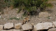 rencontre avec un renard Mini Moto, Dog Food Recipes, Pets, Fox, Dating, Travel, Animals And Pets, Dog Recipes