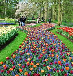 Tulip gardens in Amsterdam Amsterdam City Centre, Amsterdam Netherlands, Tulips Garden, Planting Flowers, Cool Places To Visit, Places To Go, Amazing Nature, Paths, Photo Galleries