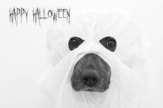 Halloween. Kuva: Suvi Ylikojola